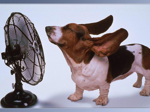 dog-and-fan